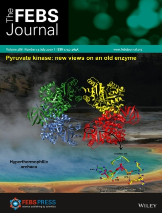 Titelbild FEBS Juli 2019: Pyruvate kinase