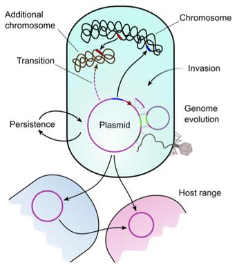 Plasmid life cycles